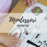montessori-hibernation