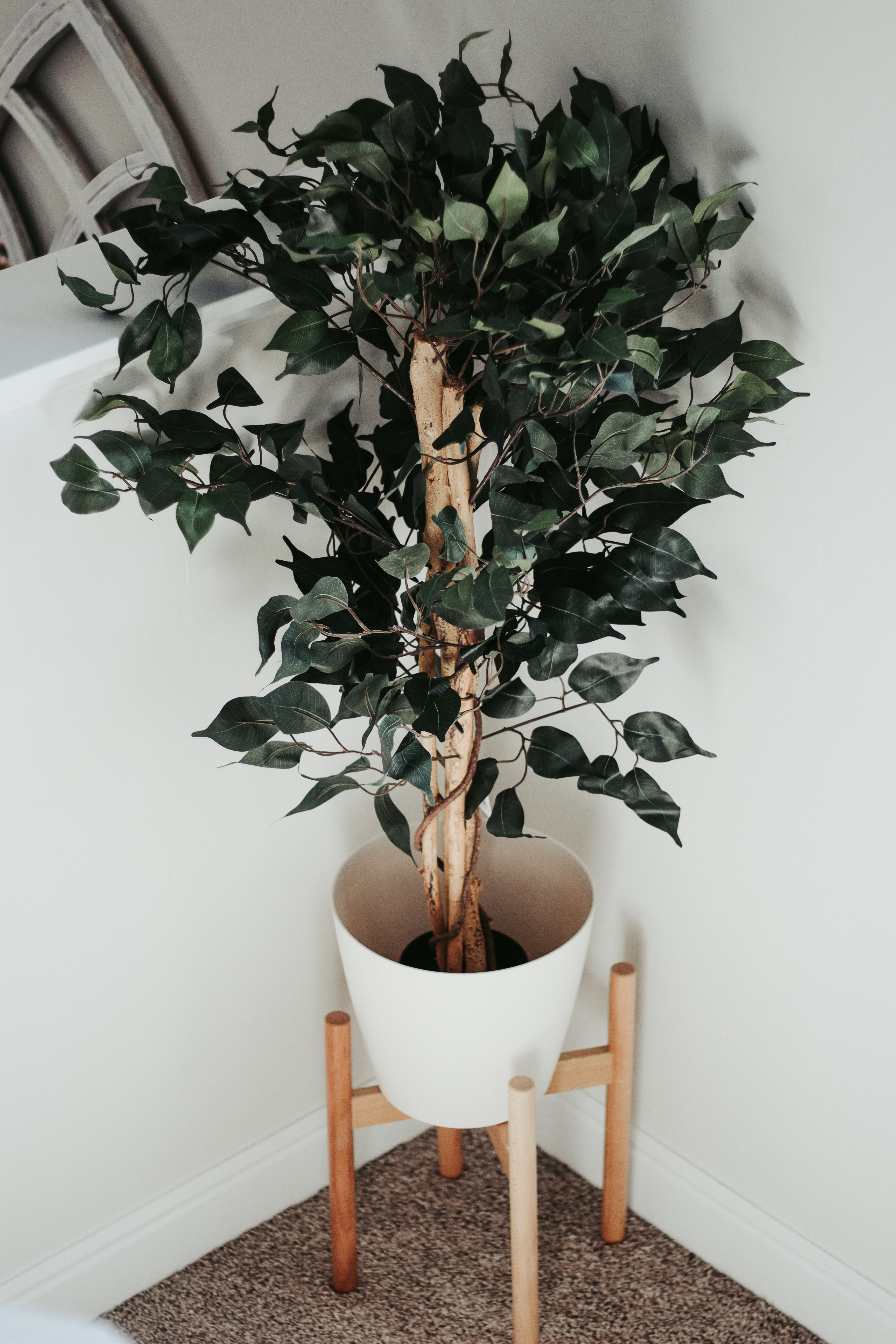 plant on a budget